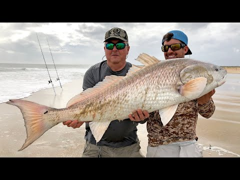 MONSTER Red Drum And Sharks From The Beach