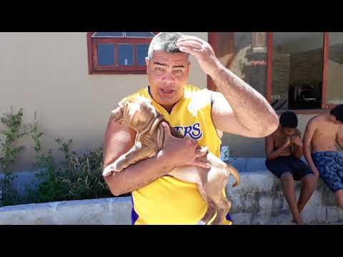 Escolhendo o melhor cão da ninhada - As famosas mordidinhas e o xixi no lugar certo!