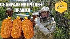 Събиране на пчелен прашец