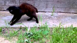 Собака съела мышь, забрав у кота!