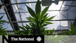 Police forces nail down pot policy days ahead of legalization
