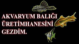 Adana'da Akvaryum Balığı Üretimi Yapan Üretimhaneyi Ziyaret Ettim.