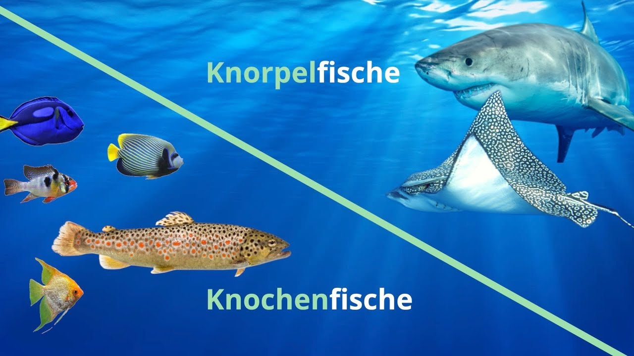 Was sind Fische Vorschau