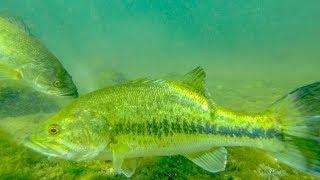 Underwater Jig Fishing! Underwater Footage + Big Bass Catch!