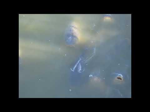 Pymatuning State Park Spillway