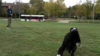 Niagara Dog Training - Obedience Training Using A Long Line