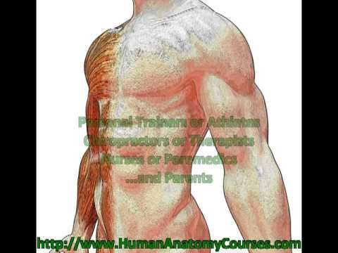 Free 3d Human Anatomy Software Youtube