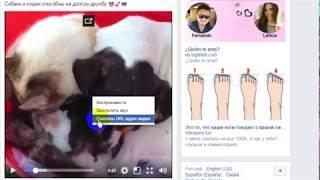 Как скачать видео с фейсбук