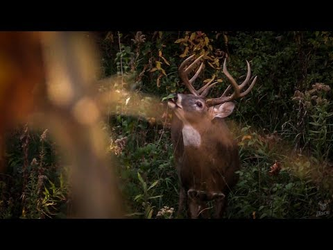 Railroad Buck – Bow Hunting Whitetails
