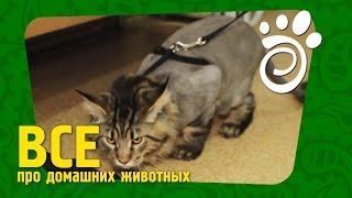 Креативная Стрижка Кота. Все О Домашних Животных