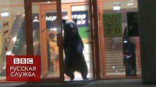 Медведь ворвался в тороговый центр в Хабаровске - BBC Russian