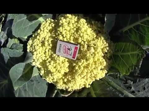 Цветная капуста и брокколи