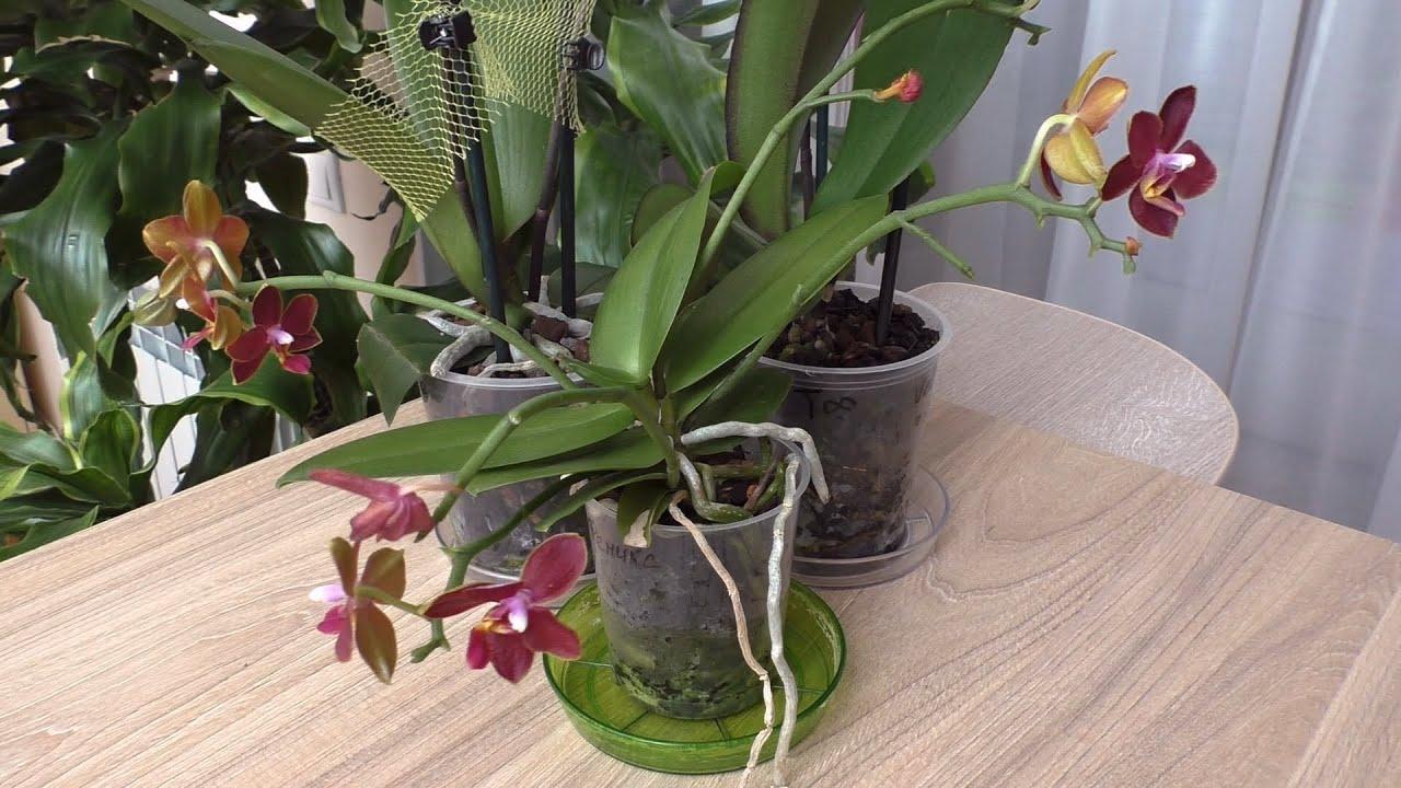 Орхидеи из посылки. Проявились гнилые корни./ Пересылка  орхидей в условиях ЛЕТНЕЙ ЖАРЫ.