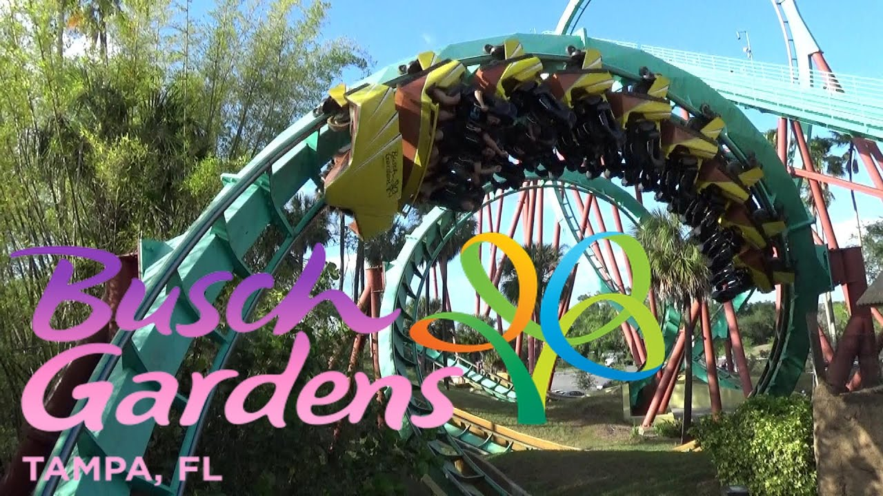 Delightful The Roller Coasters Of Busch Gardens Tampa Awesome Ideas