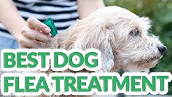Best Flea Treatment For Dog 2019 - 6 TOP Flea Treatment For Dogs