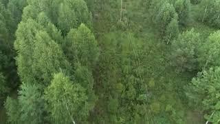 почти 1000 человек ищет пропавшую в лесу 5-летнюю девочку