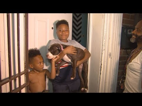 Stolen puppy found, returned to Northeast DC family