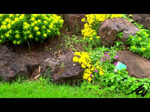 Guisachan Heritage Garden 2014 - After the Rain -   YouTube