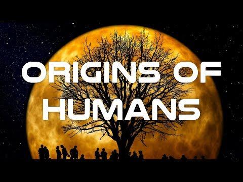 Origins of Humans Documentary