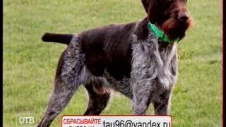ОТВ 13 05 19 21 00 Раны от укусов собаки