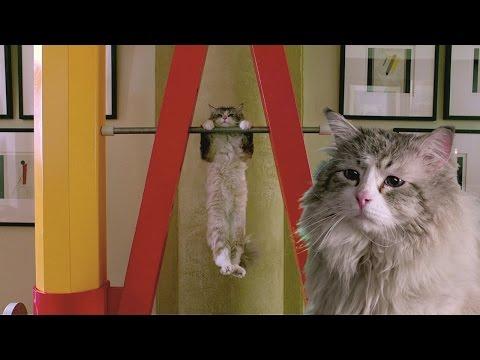 Nine Lives (2016 Comedy Film) - Official HD Movie Trailer