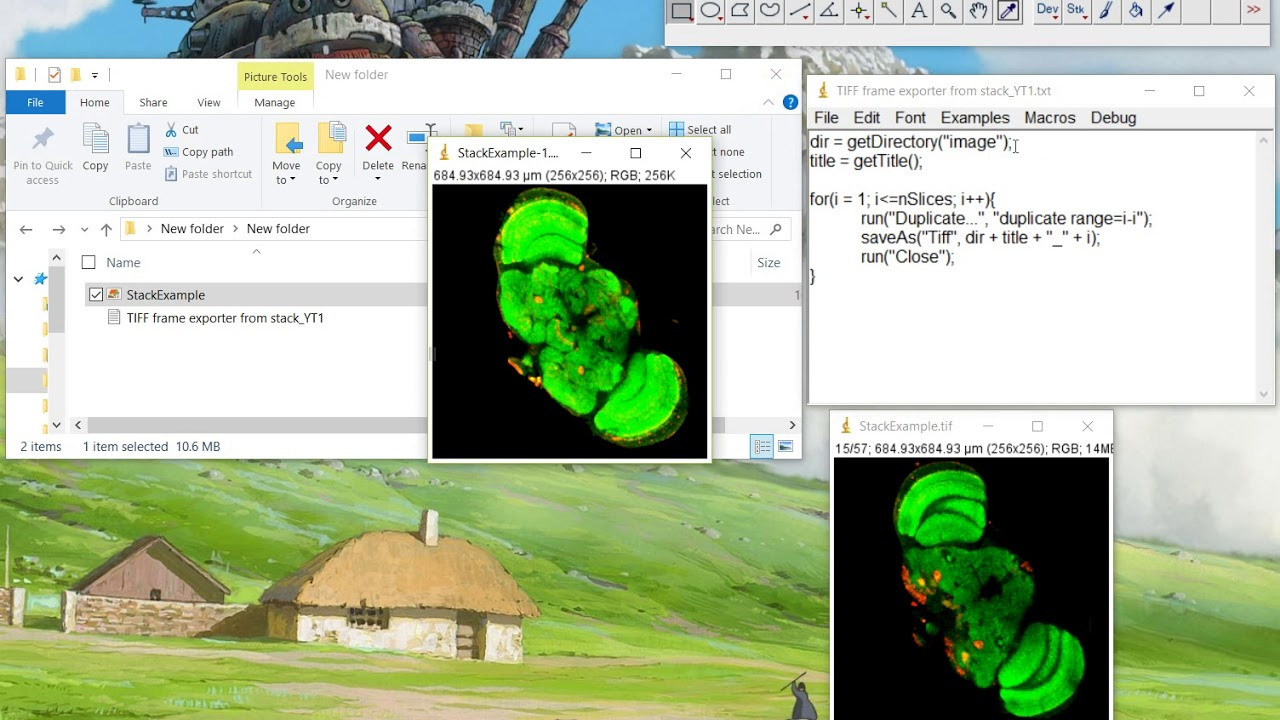 ImageJ Tutorial How to export a stack frame by frame