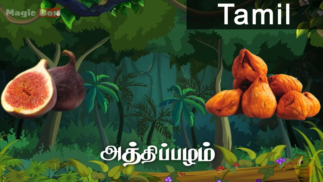 fig fruits in tamil pre school animated educational videos for