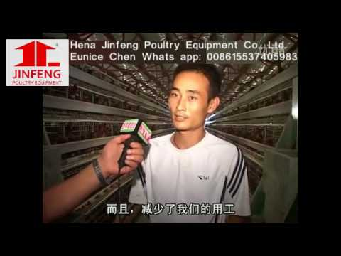 China Supplier Henan Jinfeng Poultry Equipment Chicken Cage For Layers,  Broilers, Pullets