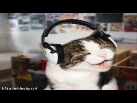 Dancing cats edit (funny gif)