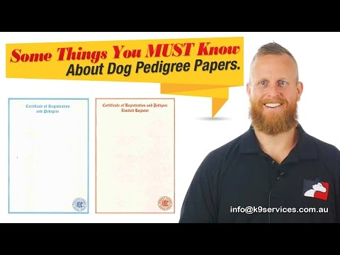 Dog Pedigree Papers: Explained