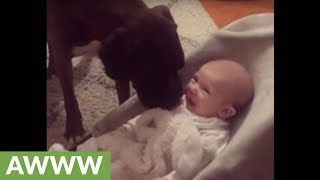Boxer preciously interacts with newborn baby
