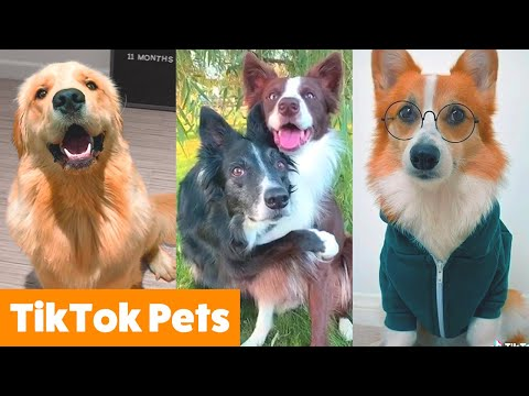Cute TikTok Pets to Make You Laugh | Funny Pet Videos