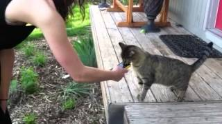 Cat vs cat sound ringtone