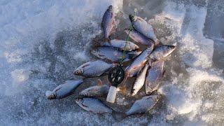 Трудовая рыбалка на реке Daugava