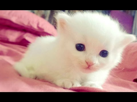 Baby Animals – A Cute Animal Videos Compilation 2016
