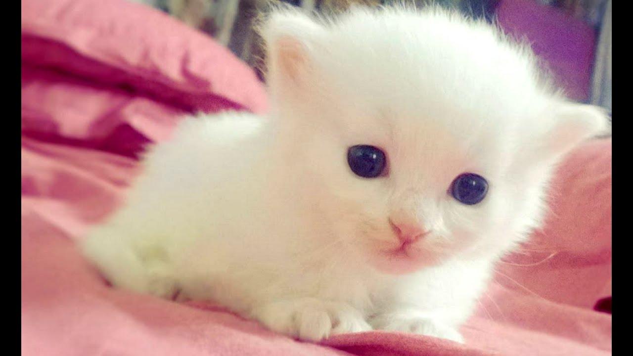 baby animals a cute