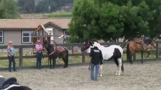 Teaching your horse to accept fly spray
