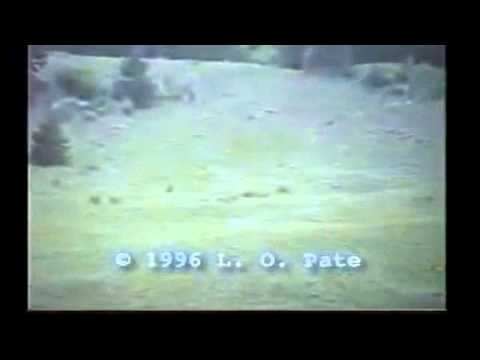The Pate Bigfoot film (AKA The Memorial Day footage)