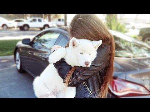 SURPRISING GIRLFRIEND WITH A PUPPY!