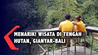 Menarik! Wisata di Tengah Hutan di Gianyar-Bali