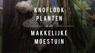 Knoflook planten in de Makkelijke Moestuin