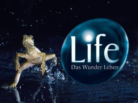 Das Wunder Leben