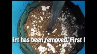 Cleaning DIY bio filter (55 gallons) for koi pond