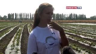 Молодая предпринимательница из Григориополя развивает клубничный бизнес(, 2016-09-27T13:45:16.000Z)
