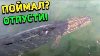 А съёмки на телефон рыба не боится в отличие от камеры Щука свободна