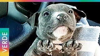 Cachorro congelado es rescatado del río Halifax