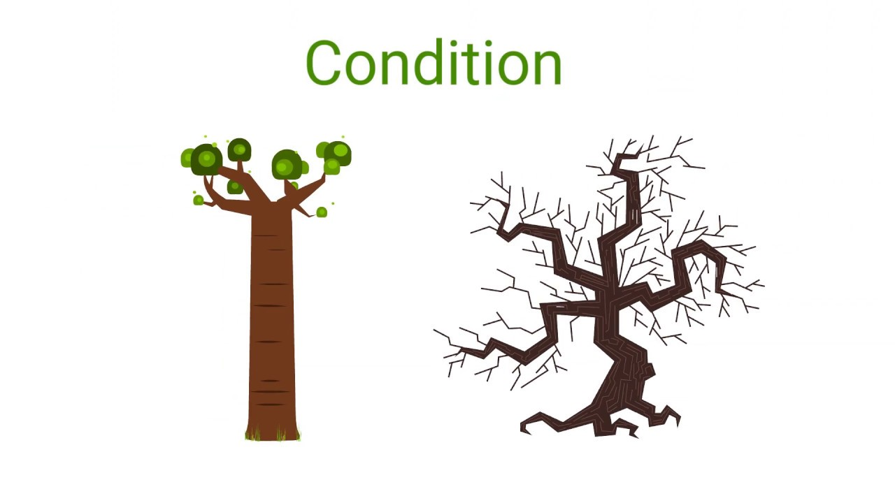 Cost of Tree Removal | Tree Removal Costs | What's the Cost?
