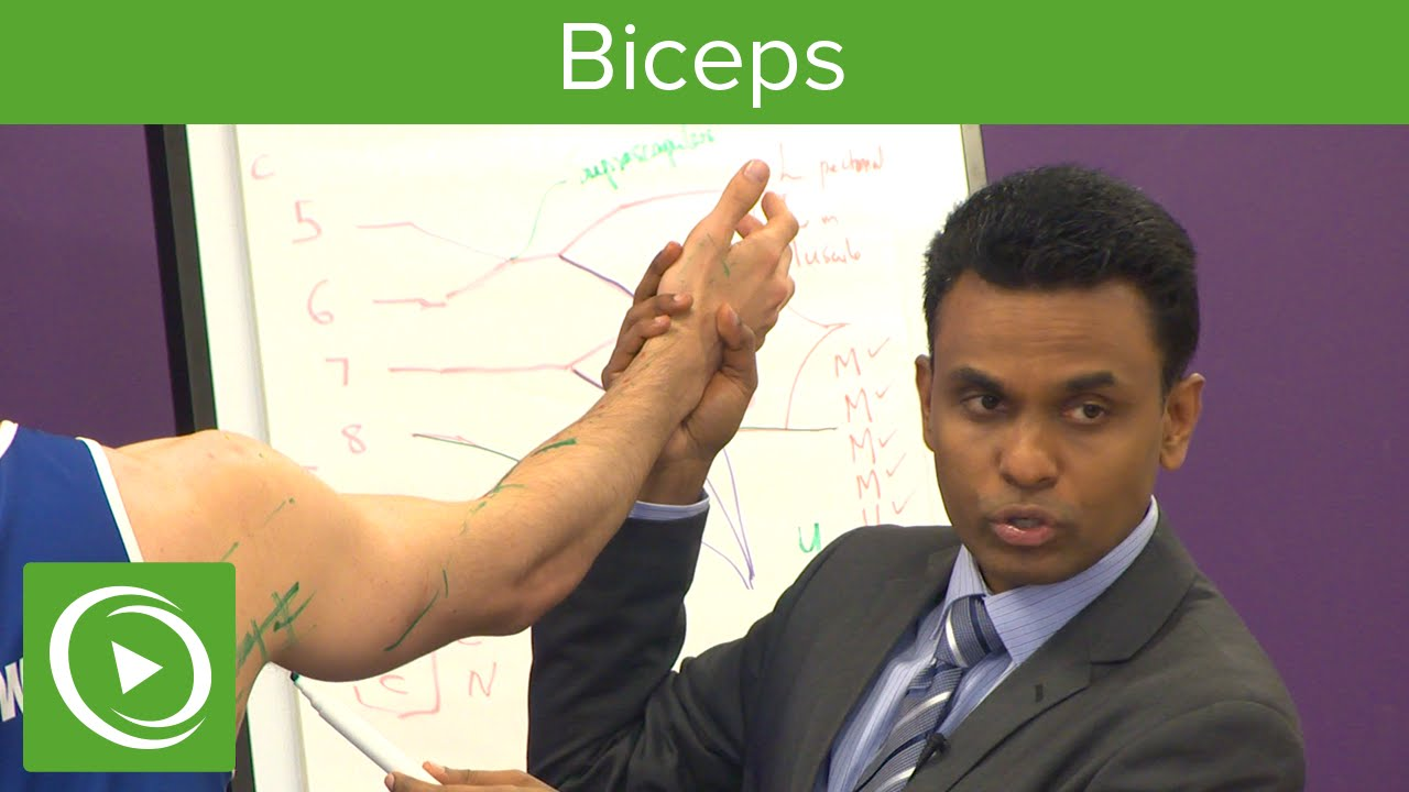 Biceps: Anatomy, Structure & Function  – MRCS | Lecturio