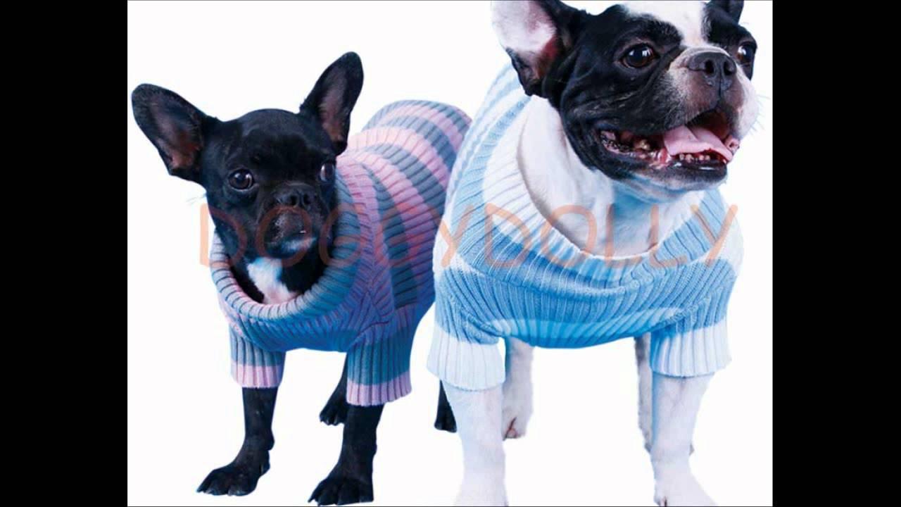 Warme Hundebekleidung von DoggyDolly die Traumwelt für Hunde - YouTube