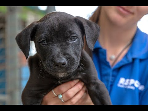 What's It Like Working At RSPCA South Australia?